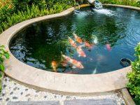 bassin 3